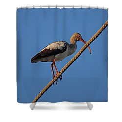 Shower Curtain featuring the photograph 8- Brown Ibis by Joseph Keane