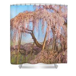 Shower Curtain featuring the photograph Miharu Takizakura Weeping Cherry08 by Tatsuya Atarashi