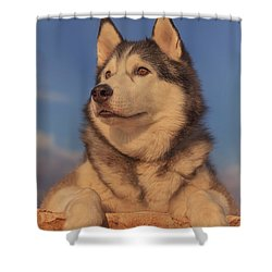Shower Curtain featuring the photograph Timber by Brian Cross