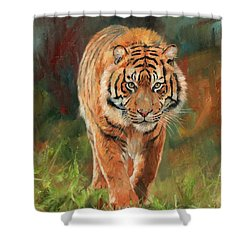Amur Tiger Shower Curtain by David Stribbling