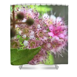 Flower Shower Curtain by Maxim Tzinman