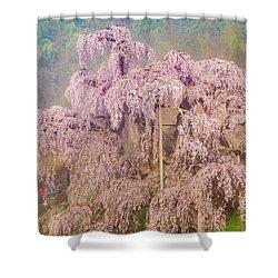 Shower Curtain featuring the photograph Miharu Takizakura Weeping Cherry09 by Tatsuya Atarashi