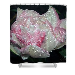 Nice Tulip Shower Curtain by Elvira Ladocki