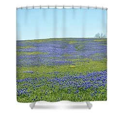 Texas Bluebonnets 12 Shower Curtain