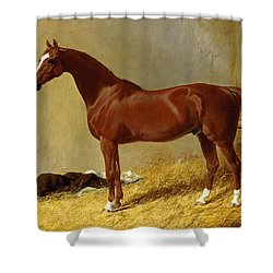A Bay Racehorse In A Stall, 1843 Shower Curtain