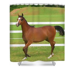 A Beautiful Arabian Filly In The Pasture. Shower Curtain