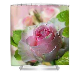 A Beautiful Rose Shower Curtain