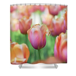 A Bed Of Tulips Is A Feast For The Eyes. Shower Curtain