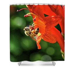 A Bee's Life Shower Curtain