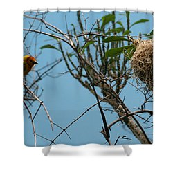 Shower Curtain featuring the photograph A Bird In 3d by Paul SEQUENCE Ferguson             sequence dot net