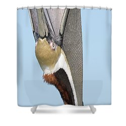 A Bit Of A Stretch Shower Curtain by Jim Gray