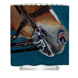 A Bit Of Control - Horse Bridle Painting Shower Curtain by Patricia Barmatz