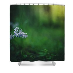 Shower Curtain featuring the photograph A Bit Of Forest Magic by Shane Holsclaw