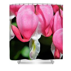 A Bleeding Heart Shower Curtain