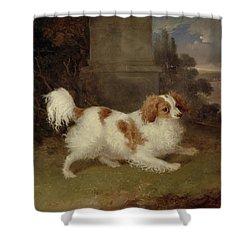A Blenheim Spaniel Shower Curtain by William Webb