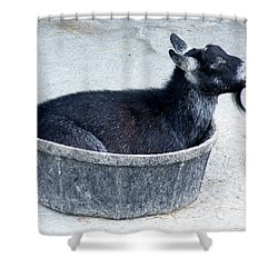 A Bowl Of Goat Shower Curtain