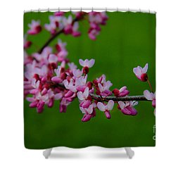 A Branch Of Spring Shower Curtain