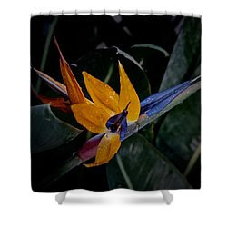 A Bright Blooming Bird Shower Curtain