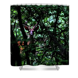 A Buck Peers From The Woods Shower Curtain by Bruce Patrick Smith
