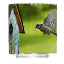 A Busy Blue Tit Mum Shower Curtain