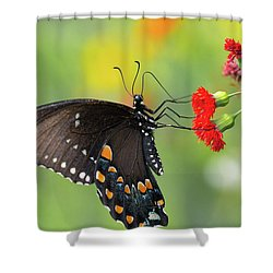 A Butterfly  Shower Curtain