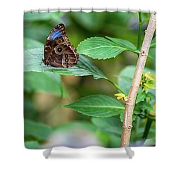 Shower Curtain featuring the photograph A Butterfly Waiting by Raphael Lopez