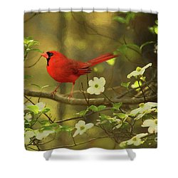 Shower Curtain featuring the photograph A Cardinal And His Dogwood by Darren Fisher