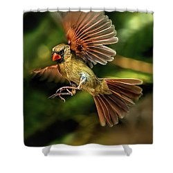 A Cardinal Approaches Shower Curtain