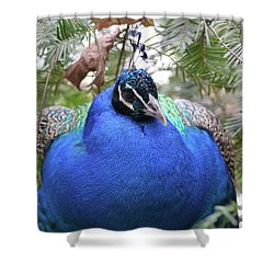 A Close Up Look At A Blue Peafowl Shower Curtain