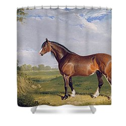 A Clydesdale Stallion Shower Curtain by John Frederick Herring Snr