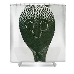 A Cobra With Raised Head And Flared Hood  Shower Curtain