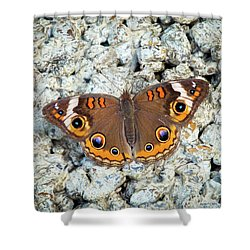 A Common Buckeye Shower Curtain