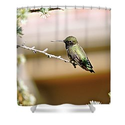 A Contented Hummer Shower Curtain
