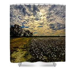 A Cotton Field In November Shower Curtain by John Harding