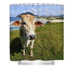 A Cow At The Beach Shower Curtain