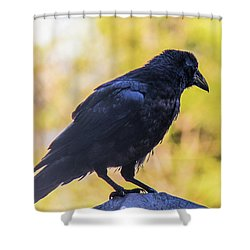 Shower Curtain featuring the photograph A Crow Looks Away by Jonny D