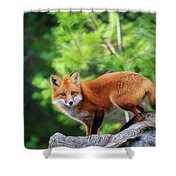 A Cunning Hunter Shower Curtain by Gary Hall