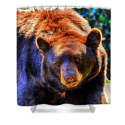 A Curious Black Bear Shower Curtain