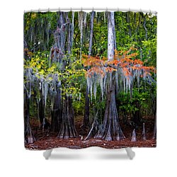 Shower Curtain featuring the digital art A Cypress Fall by Lana Trussell