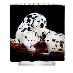 A Dalmatian Prince Shower Curtain by Blair Stuart