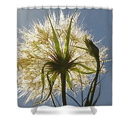 Shower Curtain featuring the photograph A Dandy New Day by Donna Kennedy