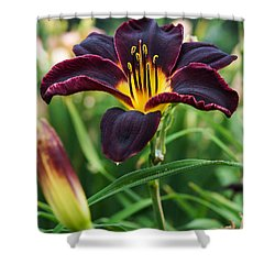 Shower Curtain featuring the photograph A Dark Purple Tiger Lilly by B Wayne Mullins