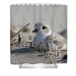 Shower Curtain featuring the photograph Petite Plover by Stephen Flint