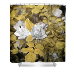 A Day In The Garden Shower Curtain by Paul Seymour