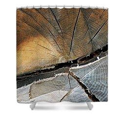 A Dead Tree Shower Curtain