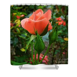 A Delicate Pink Rose Shower Curtain