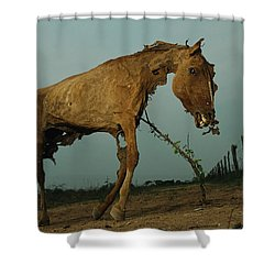 A Desiccated Horse Carcass Propped Shower Curtain