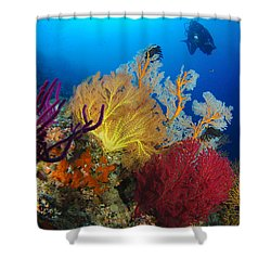 A Diver Looks On At A Colorful Reef Shower Curtain by Steve Jones
