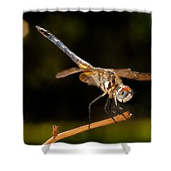 A Dragonfly Shower Curtain