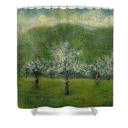 A Dream Of Apple Blossom Time Shower Curtain